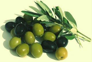 Olivo - Arboles frutales para un bosque de alimentos