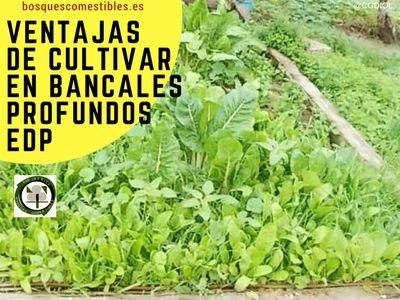 Bancales Ventajas del Cultivo