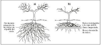 La compactación es cuando las rodadas o el pisoteo se realizan cuando el terreno es húmedo