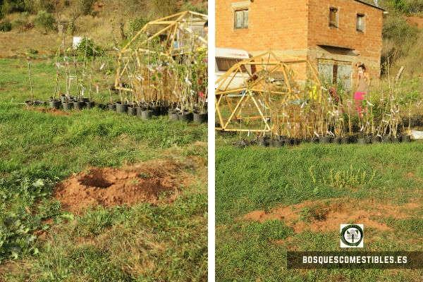 Plantar Arboles en Barcelona