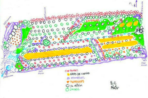Esquema del Bosque Comestible Diseñado de Villalba de la Sierra