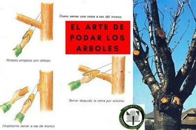 La Poda de Arboles , Cuando y como hacerlas