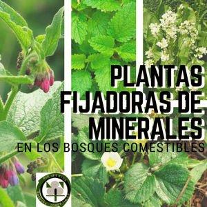 Lista de Plantas Fijadoras de Minerales
