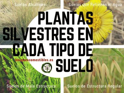 Plantas Silvestres en Cada Tipo de Suelo