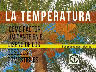 La temperatura en el bosque comestible
