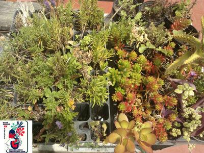 Colectivo Activismo Urbano de Jardinería