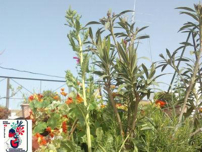 España, Jardinería Urbana