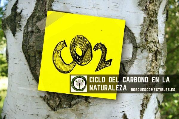 2 formas del ciclo del carbono