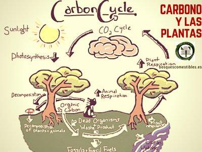El Carbono y las Plantas