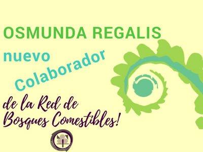 Osmunda, nuevo Colaborador de la Red de Bosques Comestibles
