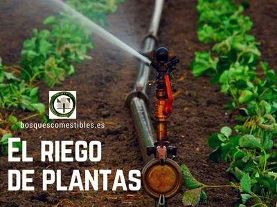Riegos de Plantas, Bosques de Alimentos