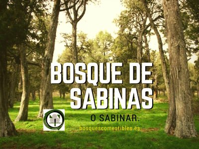 Bosque de Sabinas o Sabinar