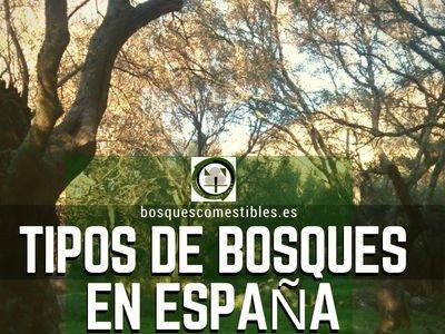 Bosques en España