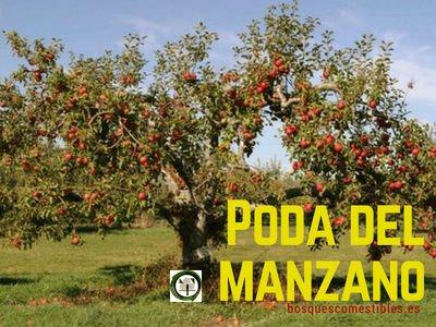 Poda del Manzano | Bosques Comestibles