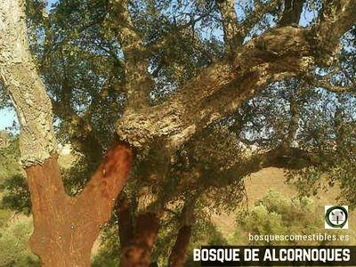 Bosque de Alconoques