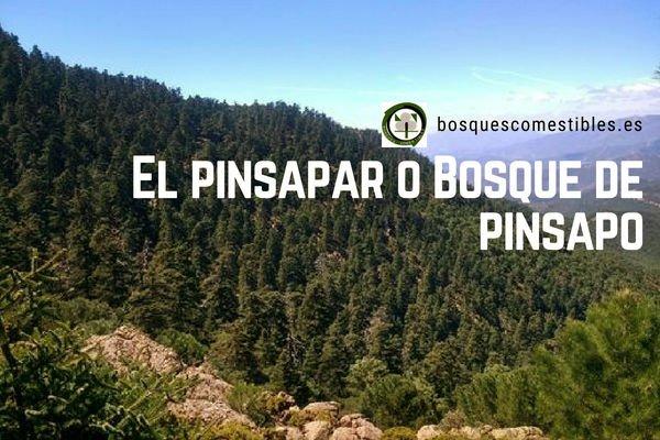 Bosque de Pinsapo o Pinsapar