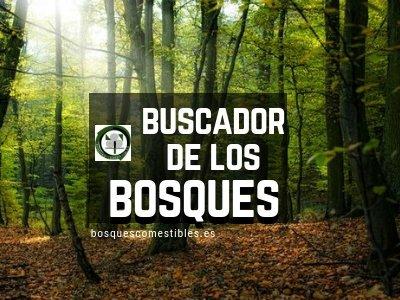 Buscador de los Bosques