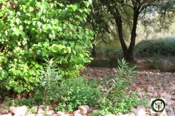 Imagen del Bosque Mediterráneo