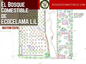 Bosque Comestible Ecocelama