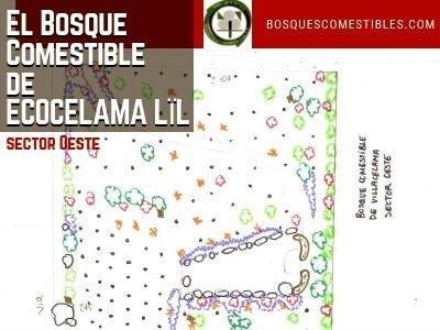 El Bosque Comestible de ECOCELAMA LÏL 3/3| Bosques de Alimentos en León