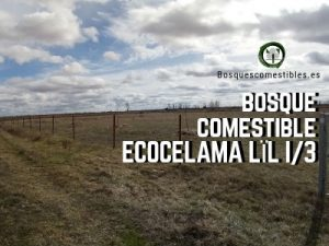 Villacelama Bosque Comestible