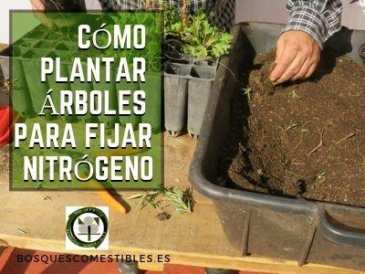 Cómo Plantar Árboles para Fijar Nitrógeno