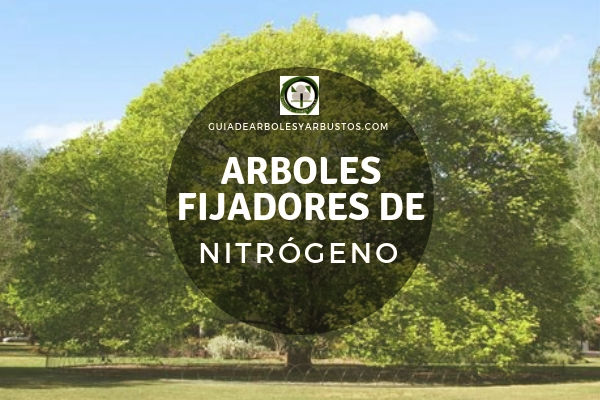 Tipos de Suelos, Nitrogeno