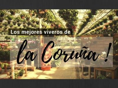 Viveros en A Coruña
