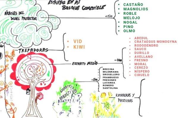 Especies del Jardín Comestible de Roque diseño por la Red Ibérica de Bosques Comestibles.