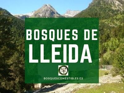 Bosques en Lleida