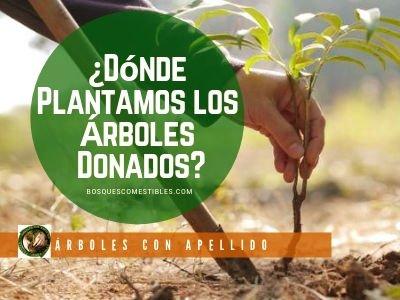 ¿Dónde Plantamos los Arboles Donados?
