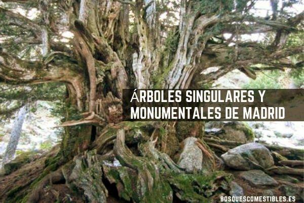 Madrid, Arboles Monumentales