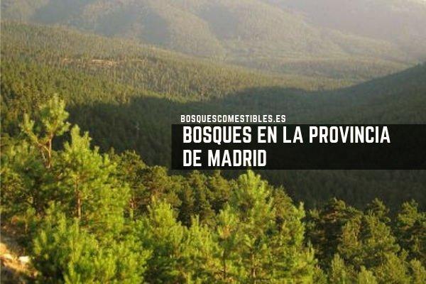 Bosques en la Provincia de Madrid