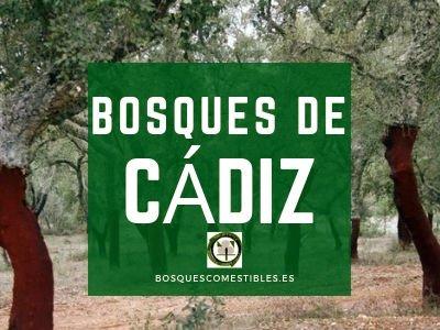 Cádiz, Bosques provincia