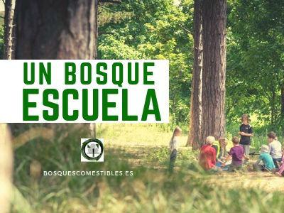 Bosques escuelas por L