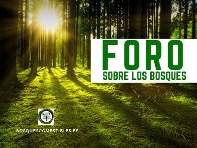 Bosque, Foro