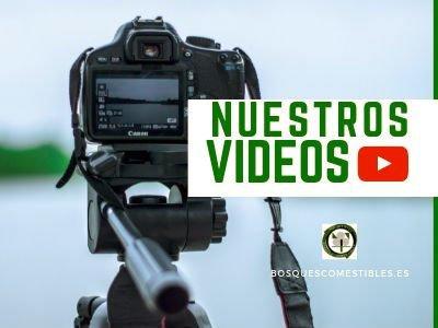 Vídeos Bosque Comestibles
