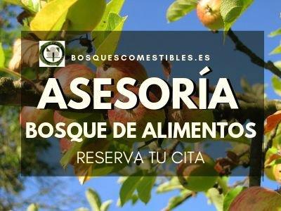 Asesoría Bosque de Alimentos – Reserva tu Cita