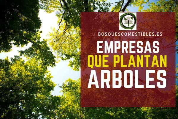 Empresas que Plantan Arboles