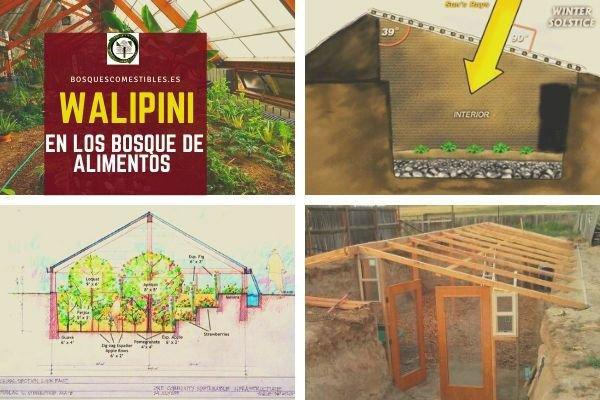 Walipini en los Bosques de Alimentos