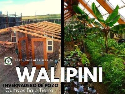 Walipini Invernaderos de Pozo