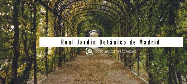 Madrid, JardínBotánico