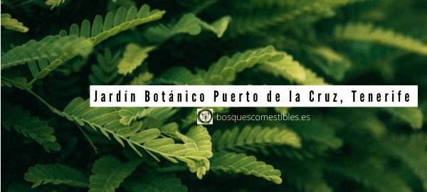 Puerto Cruz, Jardín Botánico