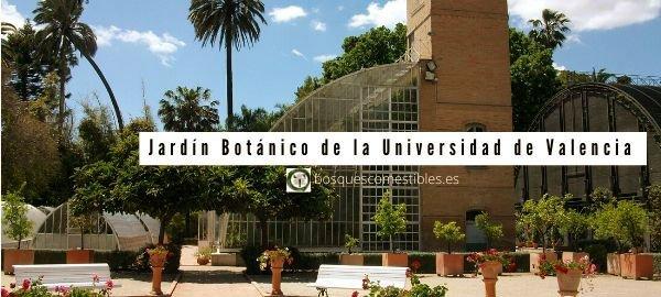 Valencia, Jardín Botánico