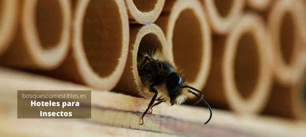 albergues para abejas