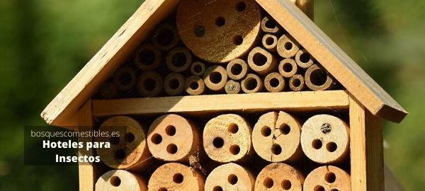 albergue para insectos