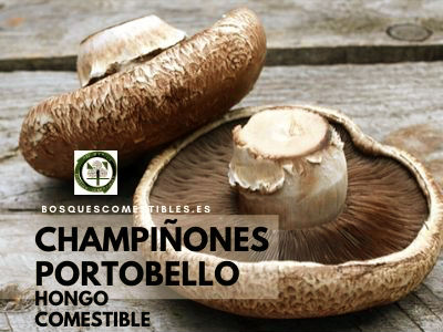 Champiñones Portobello
