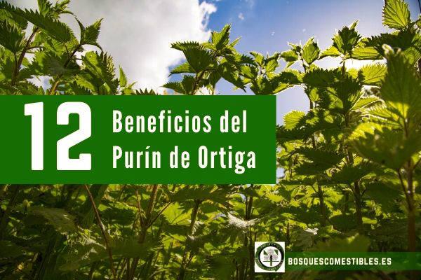 12 beneficios purín de ortiga