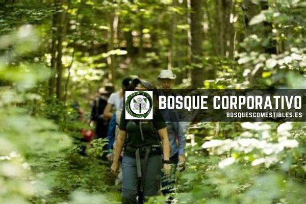 Bosques Corporativos