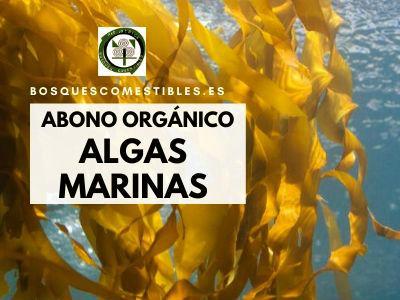 abono de algas marinas